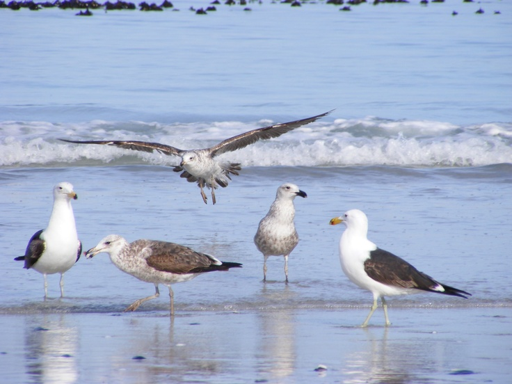 birds on Blouberg beach - Cape Town