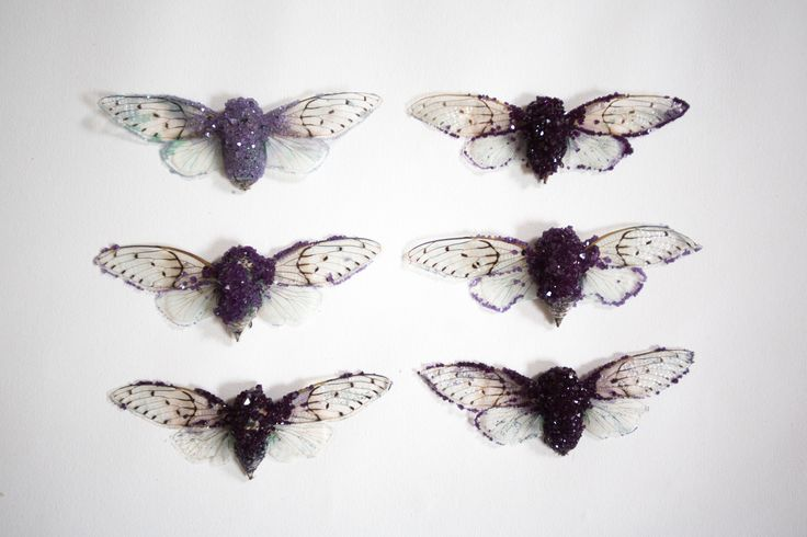 """""""Amethyst"""" Ghost Cicada by Tyler Thrasher ($90). """"These cicadas are crystallized with 100% real crystals. The color and composition of the chemicals resemble the mineral known as amethyst. These cicadas can take up to two weeks to complete, as each one is hand crystallized and handled with love and attention!"""""""