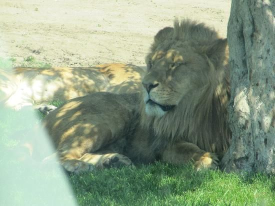 Check out all the African Lion Safari reviews on Trip Advisor by clicking on this image!