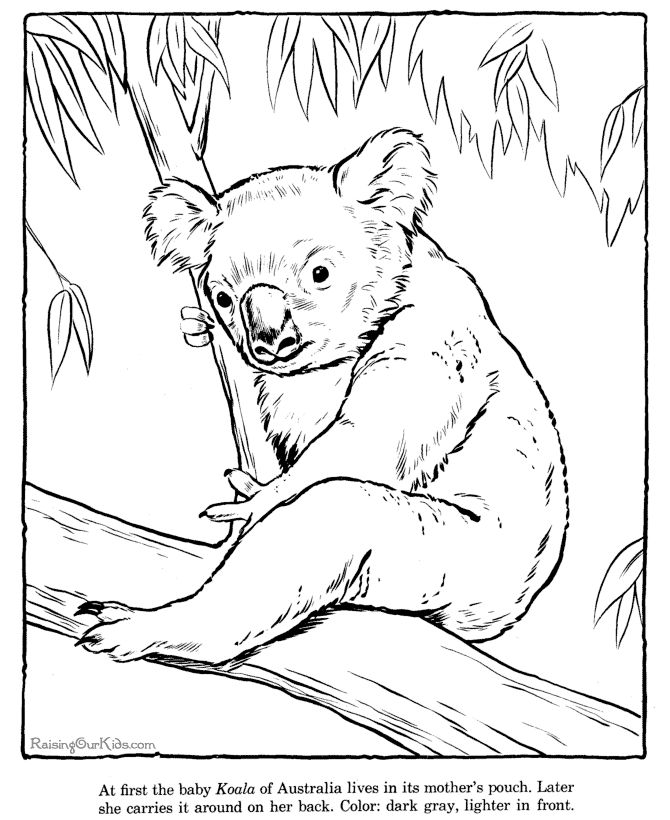 koala page to color zoo animals