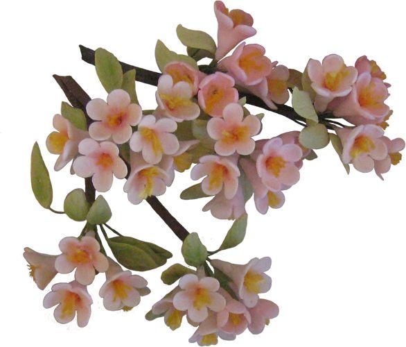 Gum Paste Sugar Cherry Blossom   #sugarflowers #sugarart #sugarcraft #cakeart #cakedecorating #sugarflower #cakeartist #sugarpaste #sugarartist #gumpaste