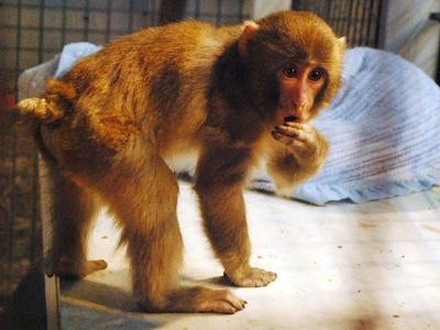 Trial date set in Cannington monkey lawsuit.
