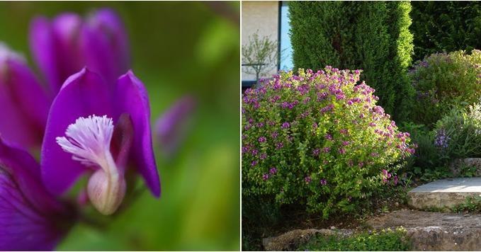 35++ Arbustos de exterior trends