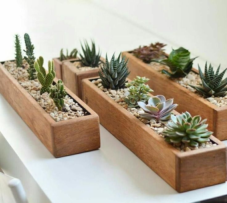 Container Ideas For Your Indoor Succulents Flowers And Plants Be