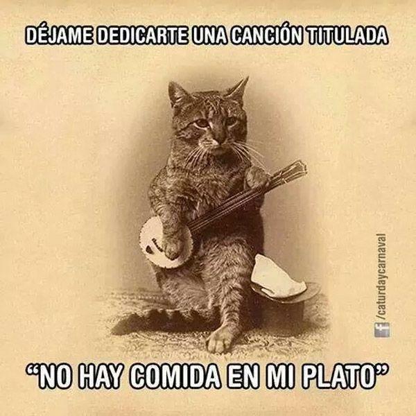 No hay comida en mi plato. #humor #risa #graciosas #chistosas ...