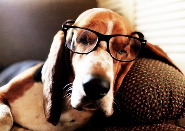 So intellectual ... my idea originally was to have a Blood Hound and call it Poirot!   that idea was vetoed by my other half ... lol!  Basset Hound