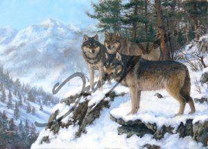 Szürke farkasok