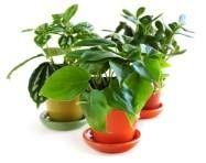 A Guide To Houseplants: House Plants Encyclopedia, Identifying House Plants,  Common House Plants, Types Of House Plants