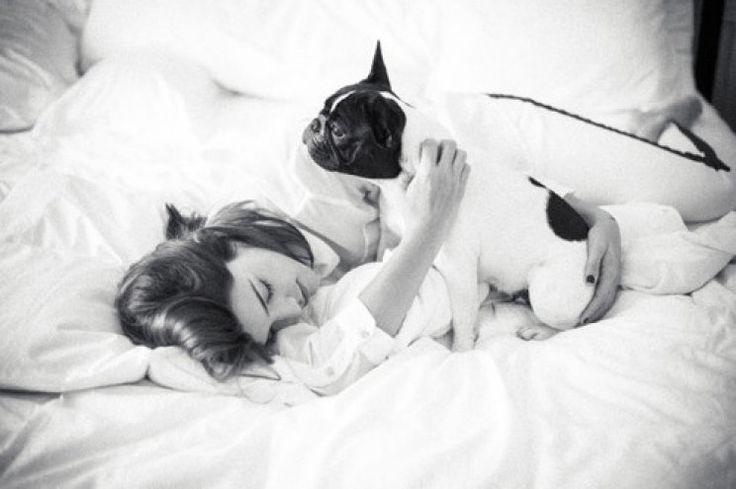 El precio de un bulldog francés, sólo para famosos - El perro es furor entre las estrellas, pero su precio es desorbitante: cuesta entre 10 mil y 18 mil pesos. ¿Lo comprarías? http://www.diarioveloz.com/c108415