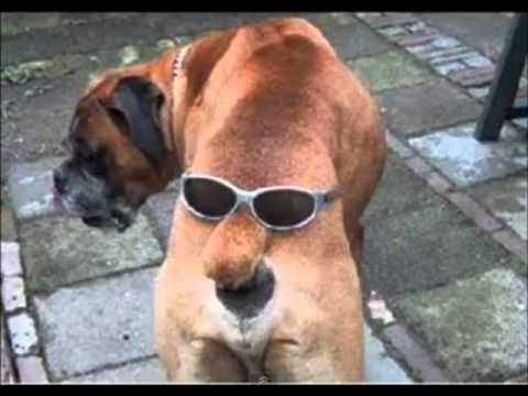 Really Funny Dogs - the Coolest Dog Photos Ever