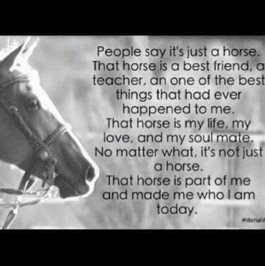 ...and that horse has saved me in ways that no one could EVER IN INFINITY YEARS imagine!