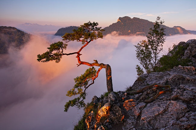 solitary tree. Pieniny Mountains, Poland.