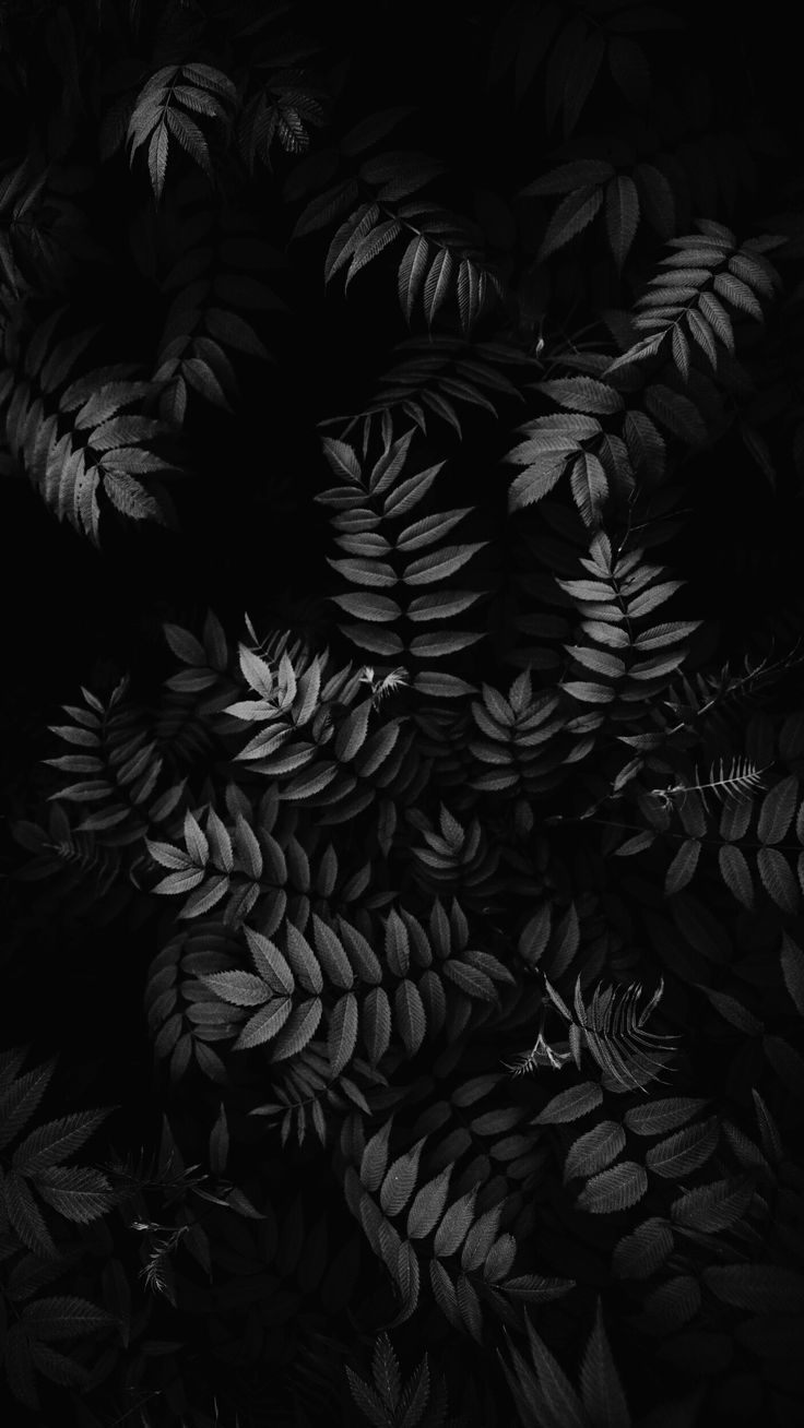 Iphone Wallpaper Insta Highlights Cover Inspo Iphonewallpaper4k Iphonewallp Black Background Photography Black Wallpaper Iphone Black And White Wallpaper Aesthetic dark leaf wallpaper