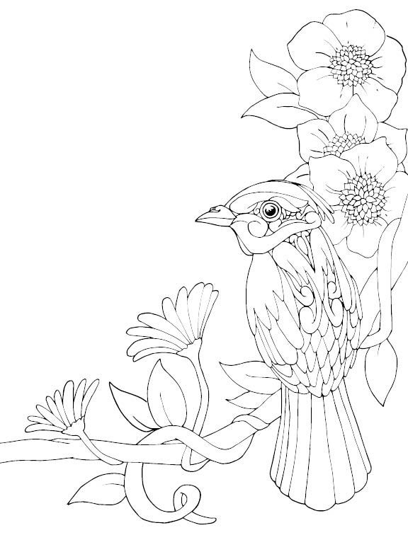 21 best stephanie pui mun law images on pinterest law for Stephanie coloring pages