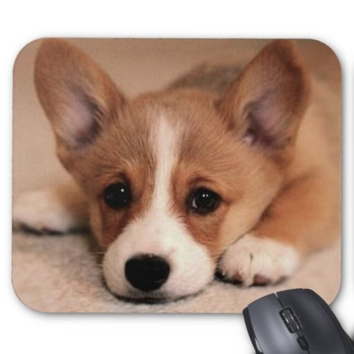 >>>Best Adorable Corgi Puppy Mousepad Adorable Corgi Puppy Mousepad lowest price for you. In addition you can compare price with another store and read helpful reviews. BuyDeals Adorable Corgi Puppy Mousepad please follow the link to see fully reviews...Cleck Hot Deals >>> http://www.zazzle.com/adorable_corgi_puppy_mousepad-144927112960163081?rf=238627982471231924&zbar=1&tc=terrest