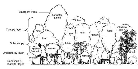 Diagram    showing forest layers   Garden ideas
