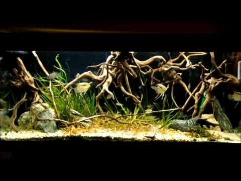 104 best images about amazon biotope aquarium on pinterest for Amazon fish tanks
