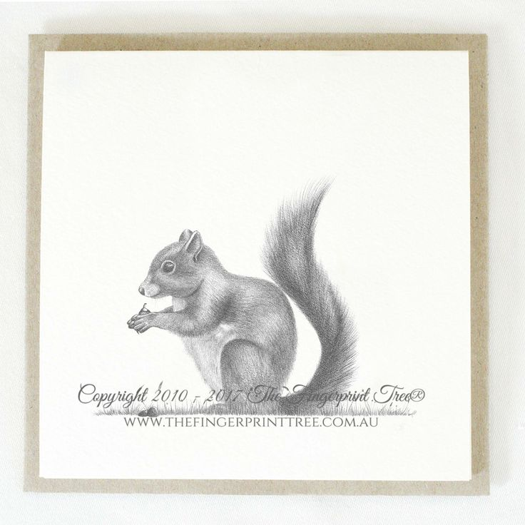 Gift card - Squirrel:  Cards! by The Fingerprint Tree® is our couture range of gift cards featuring illustrations by Ray Carter, Chief Artist & Founder.  Made-to-order and Giclée printed at our Southern Highlands studio.   We sell direct to the public and to retailers.
