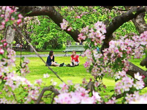 Весна в городе Прага.  Чехия. 2 часть