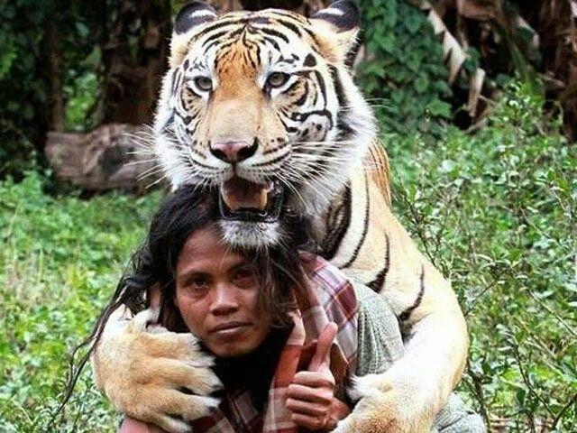 Soleh has a good ftiendship with a Bengali tiger