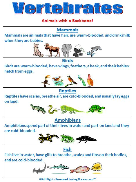 Super Subjects - Super Science - Life Science - Kingdoms - Vertebrates Chart