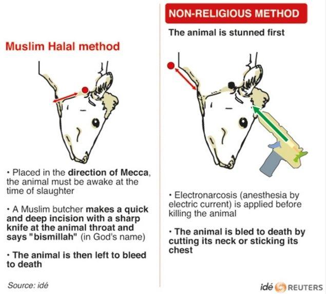 PENELITIAN ILMIAH: Metode Penyembelihan Secara Islam LEBIH BAIK Dibanding Metode Barat  ORANG BARAT Terkejut Dengan CARA ISLAM MENYEMBELIH SAPI Masya Allah semakin maju Penelitian Ilmiah semakin membuktikan kebenaran Islam. Hari Raya Idul Adha atau Hari Raya Qurban dimana Umat Islam menyembelih hewan qurban sebagai bentuk ibadah kepada Allah. Tata cara penyembelihan hewan dalam SYARIAT ISLAM yang diajarkan RASULULLAH SAW ternyata mencengangkan setelah ada pembuktian ilmiah.  Simak Penelitian…