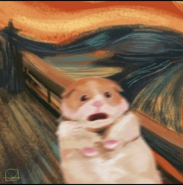 hamster   Cute animal memes, Cute little animals, Cute ...