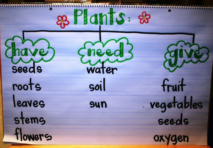 Plant Thinking Map