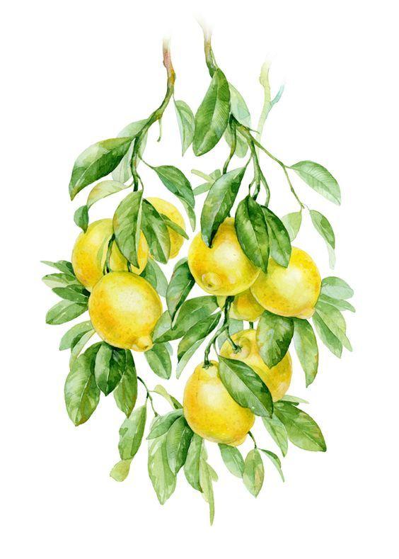 Картинки на кулинарную тему, лимон
