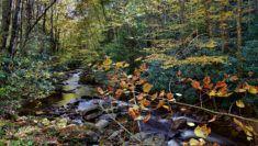 potok na podzim v lese (2)