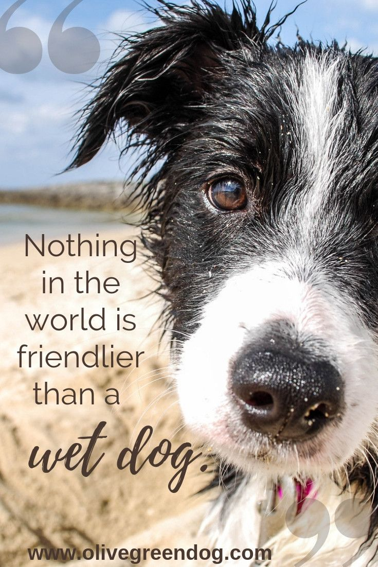 Nothing In The World Is Friendlier Than A Wet Dog Save This Pin