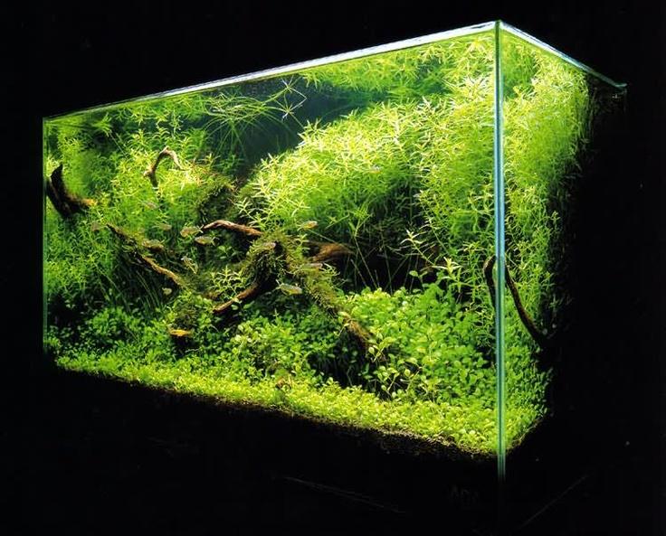 mini jardim aquatico:1000 ideias sobre Jardins Aquáticos no Pinterest