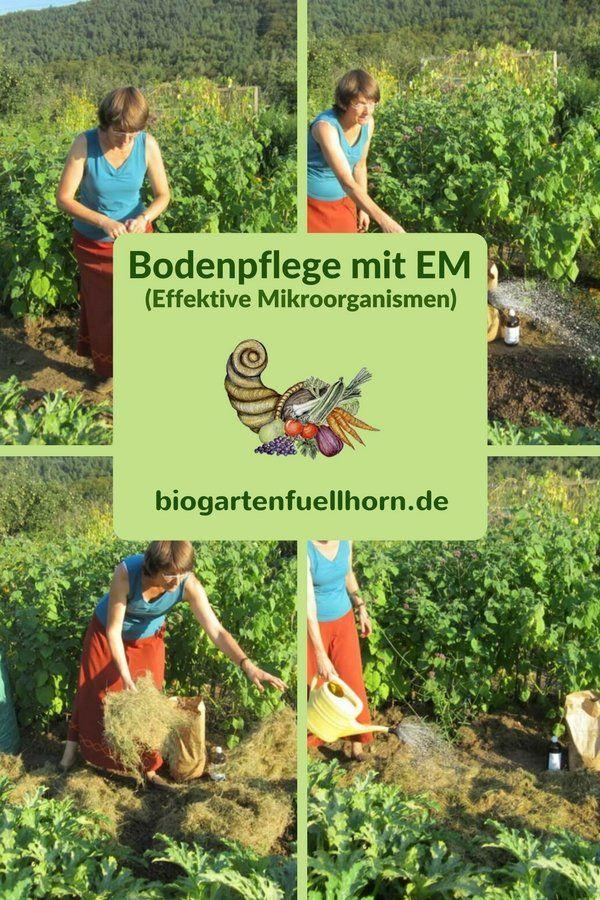 Bodenpflege mit Effektiven Mikroorganismen #garten #mulch #boden bearbeiten