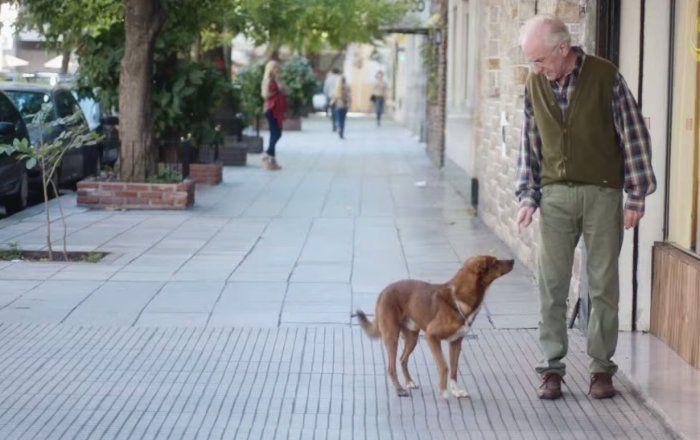 Ce chien attent son maitre qui sort de l hopital quelle amour entre le chien et l humain