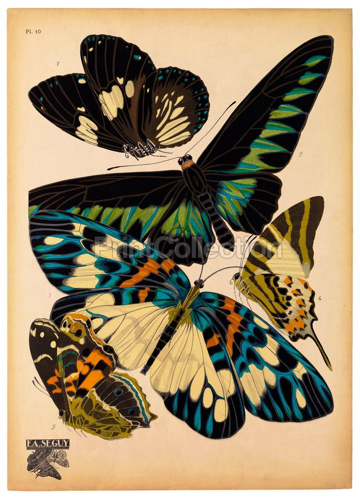 E.A. Seguy was an artist, designer and etymologist SeguyåÊwas very prolific in the early part of the last century in France. This is part of a larger set of about 14 groups of butterflies.åÊButterflie