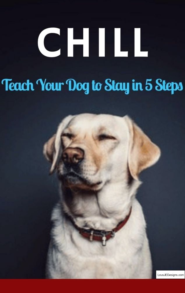 Training Tips For Hyper Dog And Pics Of How To Get Your Puppy To