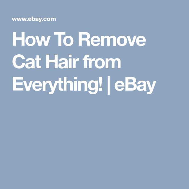 How To Remove Cat Hair from Everything! | eBay