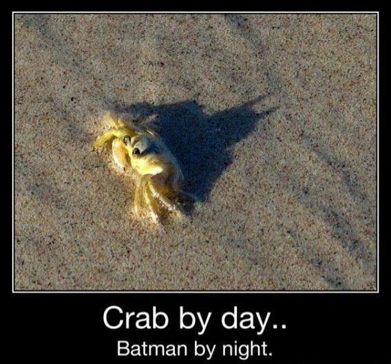 Crab by day... Batman by night