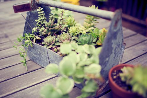 succulents in an old toolboxOld House, Patios Plants, Outdoor Escape, Outdoor Plants, Tools Boxes, Toolbox Planters, Simple Centerpieces, Metals Toolbox, Succulent Planters