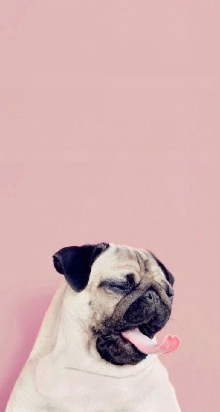 Pin by Grace Erskine on All things iPhone  Pinterest  Wallpaper, Dog and Animal