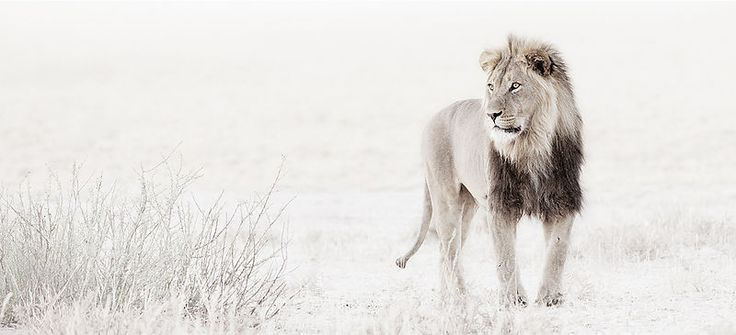 'Shaka'  - available to purchase from www.swphotography.co.za