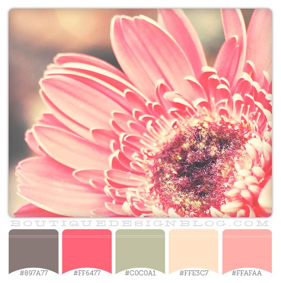 For a girl...Pink Gerbera – gray, coral and cream color scheme. These would be such cute wedding colors!! I am in love...