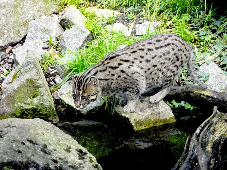 62 best images about fishing cat on pinterest cats for Moving fish for cats