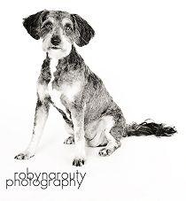 Houston SPCA Adoptions 10 for Dogs April 1113 Humane