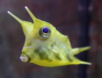 26 best images about weird fish on Pinterest | Deep sea ...