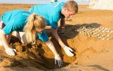 Nest Excavation   | check it out at wildlifesense.com