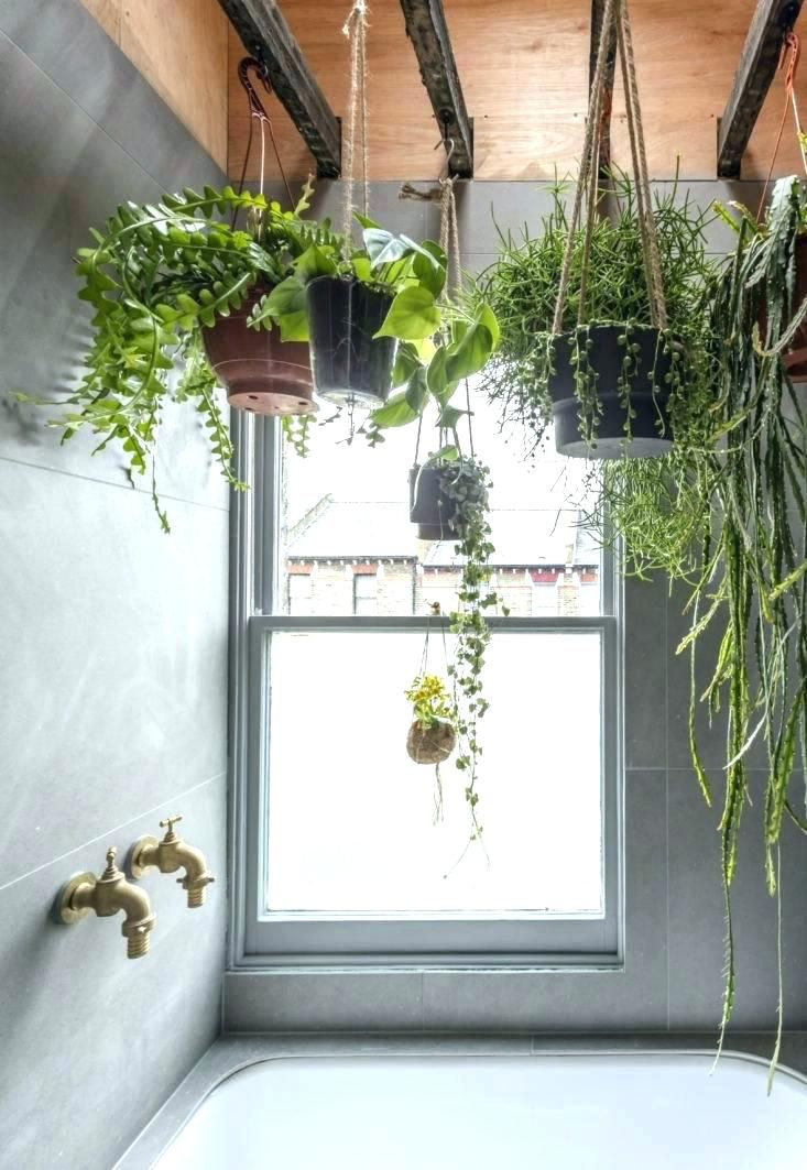 Image Result For Plants Hanging From The Ceiling Bathroom Plants