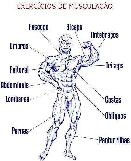 HIPERTROFIA EXERCÍCIOS Clique no grupo muscular pretendido para ter acesso aos exercícios que trabalham esse mesmo músculo.