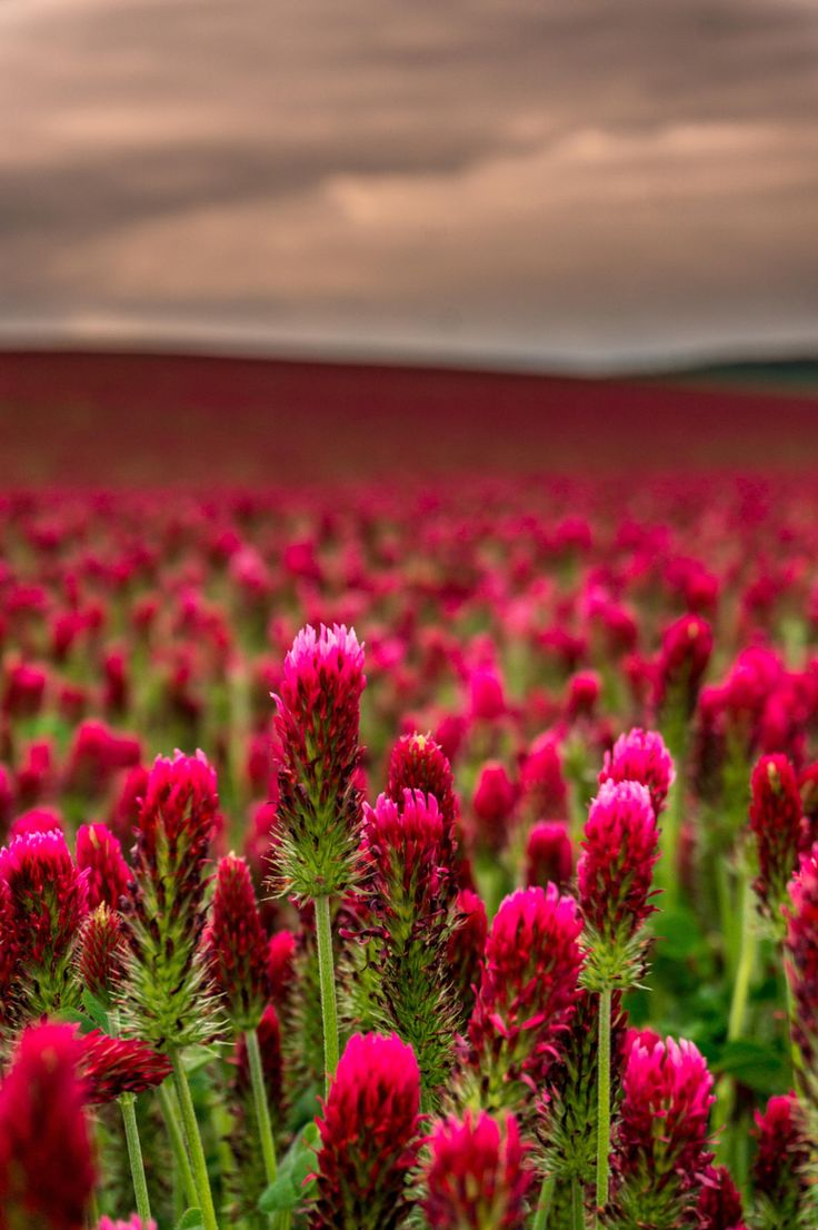 Photograph 50 Shades of Red by Tonda Melichar on 500px