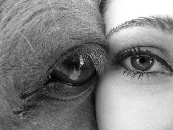 Horse and human. The bond between horse and rider....definitely would do this with my show steer!